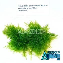TRUE MINI CHRISTMAS MOSS -...