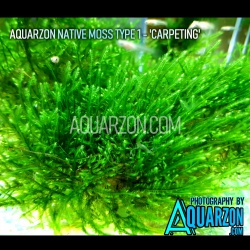 AQUARZON NATIVE MOSS TYPE 1...