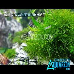 AQUARZON VARIETY BUSHY MOSS