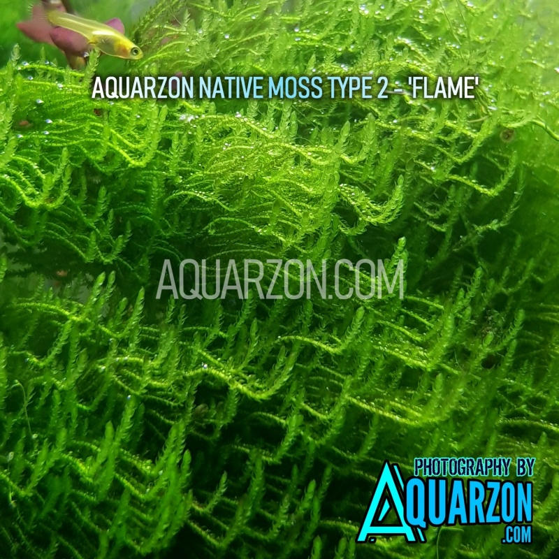 aquarzon-native-moss-type-2-flame-.jpg