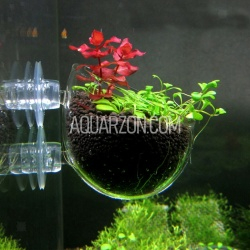 AQUARIUM PLANT GROWING...