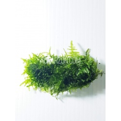 TRUE MINI CHRISTMAS MOSS -...