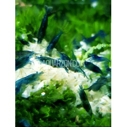 XL 250g SHRIMP SNOW FOOD -...
